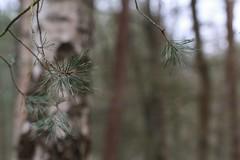 Forest bokeh (RW-V) Tags: canoneos70d canonef100mmf28lmacroisusm palaceparkhetloo paleisparkhetloo printemps frühling spring lente forest fôret wald woud green vert grün groen bokeh bos 80faves 100faves 120faves 150faves 175faves