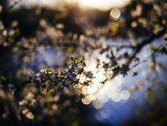 500 days of spring (kubaszymik) Tags: bokeh bokehlicious bokehkiller dof focus trioplan meyergorlitz meyer gorlitz optik primotar domiplan m42 canon spring april gliwice poland silesia bubble soap