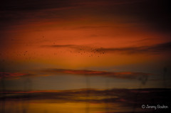 Starling home coming (JKmedia) Tags: silhouette boultonphotography glastonbury somerset lake rspb sky late evening sunset dusk 2017 fade clouds scape landscape