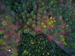 (*Niceshoot*) Tags: dji mavic djimavicpro drohne wald wood forest bäume baum tree trees weg path grün orange germany saxony lohmen sachsen deutschland de green