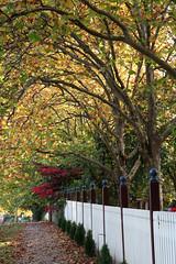 IMG_3187a (ManFromOz) Tags: ©geoffsmith gemaxphotographics autumn blackheath bluemountains autumnleaves