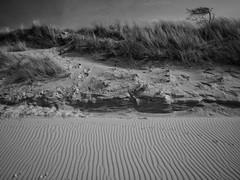 change is a constant element (paddy_bb) Tags: travel 2017 olympusomd deutschland paddybb beach germany zingst darss mecklenburgvorpommern strand sand ostsee sky omde1 düne windflüchter balticsea norddeutschland
