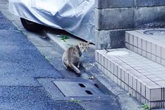 Today's Cat@2017-03-18 (masatsu) Tags: cat thebiggestgroupwithonlycats catspotting pentax mx1