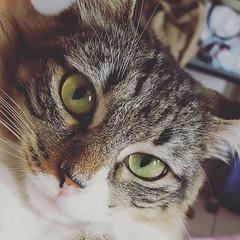 Through cat eyes (Artur Marinho) Tags: cat pet brazil brasil natureza naturaleza natural animal colours colors felino
