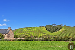 California Wine Country (randyandy101) Tags: wine winecountry winery pasorobles californiacentralcoast california highway46 vines vineyards buildings bluesky greenfields greengrass greenhills
