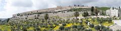 000 Lato orientale del Monte del Tempio vista dal Monte degli Olivi1 (Teodor Ion) Tags: terrasanta gerusalemme montesion israeljerusalem templemount oldcityofjerusalem