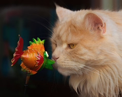 I like fish for dinner but YOU are looking a bit dry ! (FocusPocus Photography) Tags: linus katze kater cat chat gato tier animal haustier pet fisch fish dekoration decoration