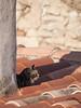 Le chat derrière la cheminée ** (Titole) Tags: chat cat katze kat toit roof rooftop chimney tiles tuiles rooftiles thechallengefactory
