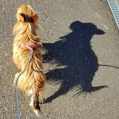Photo of Dr Tyson & mr. Hide #walkingdog #yorkshire #shadow #sunnyday #dogslovers