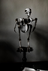 Is It Cold in Here? (Steve Taylor (Photography)) Tags: skeleton bird monocolor monocolour contrast stark newzealand nz southisland canterbury christchurch shadow bones museum