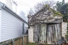 Just down our street (Ian@NZFlickr) Tags: garage overgrown dunedin nz fog foggy morning otago