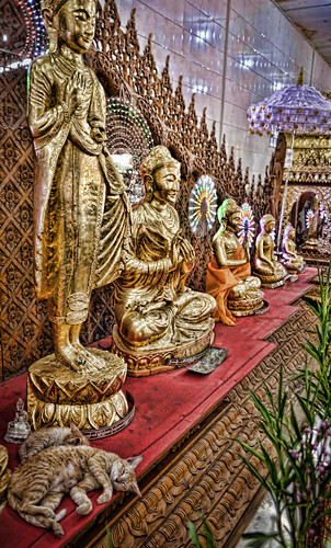 buddhas burma cats chaukhtatgyibuddhatemple holidays lightroom myanmar onestoptraveltours topazlabs yangon