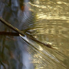 altered flow (Edinburgh Nette ...) Tags: water abstracts ripples interuption reflections flow
