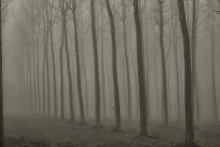 percorsi di nebbia