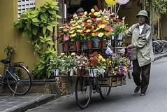 Vietnam (ubuc) Tags: people man flowerseller portrait travel ubuc nikkor70200mm nikond800 hoian quangam vietnam