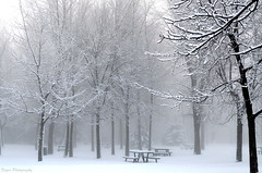 Spring's cold temptations (Captions by Nica... (Fieger Photography)) Tags: weather winter white serene snow storm nature trees tree path parc picnic table covered forest fog foggy misty mist outdoor spring quebec canada landscape