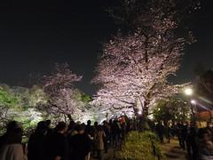 IMGP5662 (digitalbear) Tags: pentax q7 08widezoom 17528mm f374 chidorigafuchi chiyodaku tokyo japan yozakura sakura hanami cherry blossom blooming yurakucho tonkatsu shige tokyointernationalforum kokusai forum