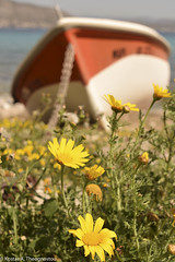 Spring vibes (ktheog) Tags: salamina greece island