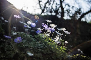 backlight, flares and flowers