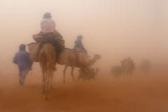Blind Trust (Bergfex_Tirol) Tags: bergfex sandsturm dromedar sandstorm desert berber morocco marokko dromedary sahara