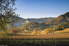 Sunset in Sonoma County Wine Country (allentimothy1947) Tags: calfiornia sonomacounty spring vineyard sunset golden hour valley moon kenwood winery wine sonoma country