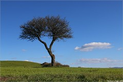 Foto Maggino2 (Giovanni Maggino) Tags: albero altairpinia primaverainirpinia primaverairpina ngc canon70d