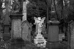 An Angel watches over the grave of Dan Crawley (IanAWood) Tags: abneyparkcemetery stokenewington london londonsvictoriancemeteries londonsmagnificentsevenvictoriancemeteries oldgravestones citiesofthedead atrest bringoutyoudead oldcemeteries nikkorafs58mmf14g nikondf walkingwithmynikon graveart angelsinblackandwhite