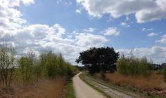 Het is alweer een beetje groen op de Strabrechtse Heide/ It's already a little bit green on the Strabrechtse Heath (truus1949) Tags: wandelen heeze strabrechtse heide lente landschap natuur bomen struiken wolken