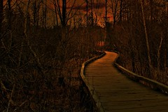 A Path to Happiness (photographicimages) Tags: path happiness evening light woodland landscape wood walkway spring