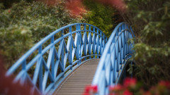 Johnston Gardens (6 of 3).jpg (___INFINITY___) Tags: 6d aberdeen johnstongardens nature bokeh canon darrenwright dazza1040 dof eos infinity