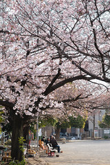 20170406-DS7_2520.jpg (d3_plus) Tags: bokeh aiafnikkor28105mmf3545d d700 屋外 thesedays 桜 日常 walking nature 風景 aiafzoomnikkor28105mmf3545d ボケ street 路上 ポタリング macro 自然 自転車 景色 川崎 ニコン 横浜 神奈川県 sky ストリート kanagawapref 28105mmf3545 japan サイクリング streetphoto 春 spring dailyphoto nikon zoomlense plant yokohama flower nikkor pottering outdoor 路上写真 28105mm 植物 281053545 散歩 daily nikond700 花 ウォーキング 28105 ズーム 28105mmf3545d 28105mmf3545af 空 日本 bloom scenery cycling kawasaki