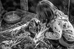 140417-finale_033 (emanueleronchi) Tags: finaleligure liguria luce agriturismo coniglio famiglia primavera rurale vacanze