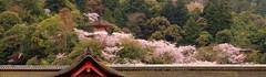 厳島神社の一部 (yoshinori.okazaki) Tags: 広島 厳島神社 桜
