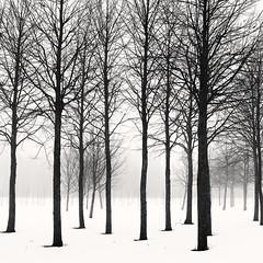 Black Trees (Vesa Pihanurmi) Tags: trees winter fog misty snow finland helsinki trunks branches blackandwhite monochrome nature