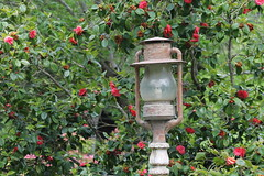 let there be light! (Catstoy64) Tags: garden leaves green light trees flowers red rustic