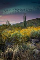 20170320-DSC_4939 (lilnjn) Tags: arizona landscape southwestunitedstates travel unitedstates sky sunrise whitetank