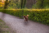 Lil Poochie (Alias_Axel_Ryder) Tags: dog alley allée planes platanen allee platanenalle hund cute tree green hecke baum tübingen hölderlinturm wonderful lichtstimmung canon eos 6d axel ryder