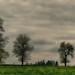 A dull morning (ramerk_de) Tags: fog cows upperpalatinate clouds