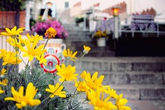 Have a great Sunday! (Shahrazad_84) Tags: taormina cosy cosytime sicilia sicily spring april flowers relax street daisies scales