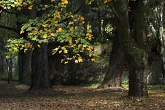 Mt Wilson 14 (trisharooni) Tags: australia autumn mtwilson breenhold