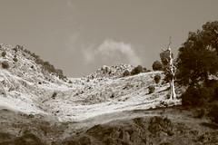 High Asf (@jawrobertson) Tags: old tonality contrast grass rock climb hill face insanity