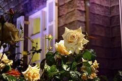 Rose (kota-G) Tags: park flower rose japan night garden photography tokyo photo illumination