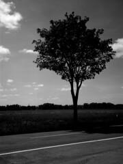 Tree and clouds on sunny, windy day - 2 (Linhof Kardan Super Color ST, Webphota NP22 9x12) (baumbaTz) Tags: trees sky blackandwhite bw cloud color tree film monochrome field june st juni clouds analog germany deutschland blackwhite atl flash feld himmel wolke wolken super ishootfilm 49 epson sw linhof analogue monochrom grayscale blitz schwarzweiss bäume analogphotography baum stade 9x12 2200 greyscale schneider schneiderkreuznach niedersachsen lowersaxony filmphotography jobo fpp 150mm v500 adox 9x12cm filmisnotdead autolab 2013 np22 kardan analoguephotography componon kutenholz webphota filmforever atomal epsonv500 yongnuo adoxatomal49 filmphotographyproject atl2200 joboautolabatl2200 linhofkardansupercolorst schneiderkreuznachcomponon150mmf56 webphotanp22 20130603