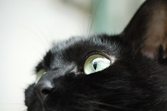 (Think_) Tags: black cat  bobbi