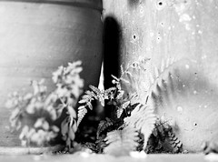 detalles de vida (Felipe Crdenas-Tmara) Tags: del la y para centro el estudio vida felipe principio formacin humanista hasselblad503cx experiencial epsonperfectionv500photo crdenastmara felipecrdenastmara carlzeissplanart100mm35 colegiolaalborada centiritgocom