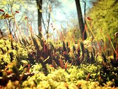 Moose im Makro (Basinbah) Tags: wasserfall pflanze cascade moos fixme teufelsschlucht irrel bestimmen replacebyoriginal