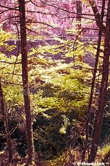 Mirror Lake (Infrared) (2121studio) Tags: china city ir surrealism dream nikond50 unescoworldheritagesite illusion land infrared chengdu wonderland sichuan  magical   jiuzhaigouvalley mimpi traveltochina ilusi khayalan convertedinfraredcamera malaysianinfraredphotographer  jiuzhaivalleynationalpark