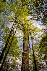 (Pashen Photography) Tags: life park blue trees sky tree green love nature leaves clouds creek fun photography one photo focus pretty peace state photos pennsylvania good earth live perspective free explore bark thinking times rays ponder racoon pondering nikond5000