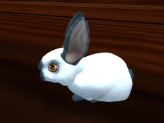 4th Spoiler...Marnier Eye (LORDED76) Tags: bunnies secondlife marnier himalayanblue secondlifepets uprightears moonlightshade ozimals ozimalsbunnies 26update