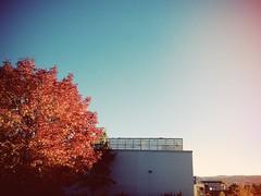Autumn light at #myTRU (cjazzlee) Tags: campus kamloops mytru